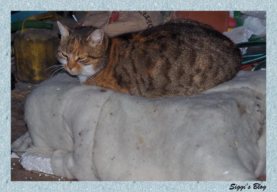Katzengrill