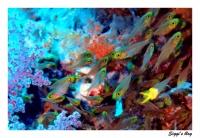 ssh14-10_14_glasfische_p7152099