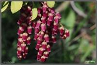 180414 Lavendelheide