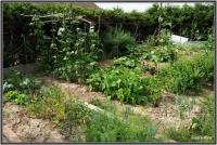 180617 Garten
