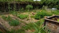 180606 Garten